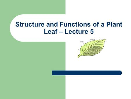 Structure and Functions of a Plant Leaf – Lecture 5