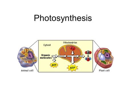 Photosynthesis. 1. Photosynthesis uses the energy of sunlight to convert carbon dioxide into sugars. This process supplies usable energy for life on Earth.