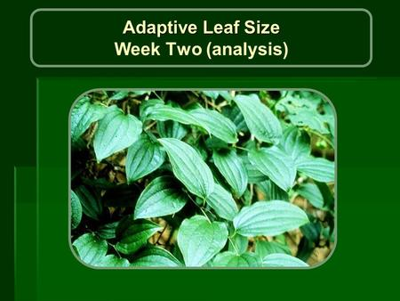 Adaptive Leaf Size Adaptive Leaf Size Week Two (analysis)