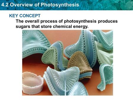 I can relate producers to photosynthesis.