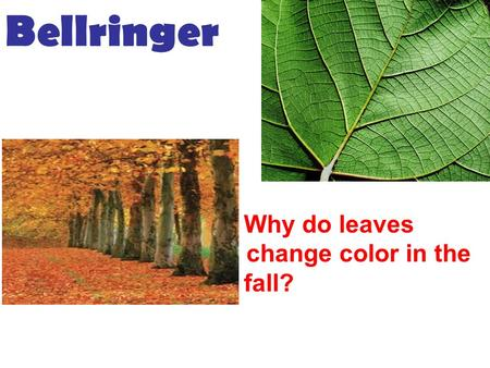 2.WHY DO LEAVES Why do leaves chang change color in the f fall? Bellringer.