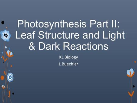 Photosynthesis Part II: Leaf Structure and Light & Dark Reactions KL Biology L.Buechler.