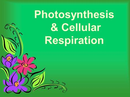 Photosynthesis & Cellular Respiration. What is Photosynthesis? The process of photosynthesis is a chemical reaction. It is the most important chemical.