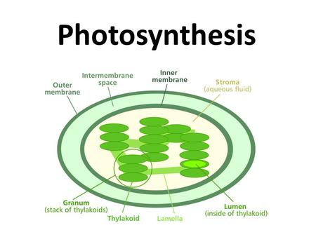 Photosynthesis What do you know….?