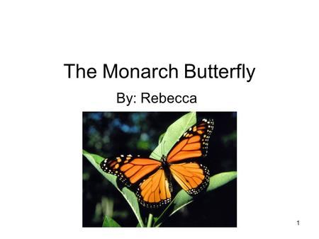 1 The Monarch Butterfly By: Rebecca. 2 TABLE OF CONTENTS MEET THE MONARCH BUTTERFLY…. 3 HOME SWEET HOME ….. 4 DINNER TIME……………..5 ANIMAL ADAPTATIONS…6.