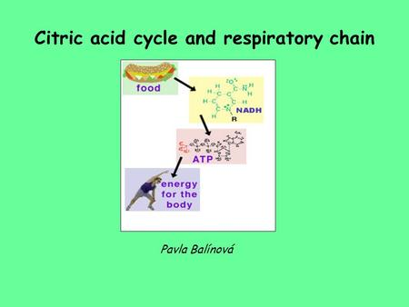 Citric acid cycle and respiratory chain Pavla Balínová.
