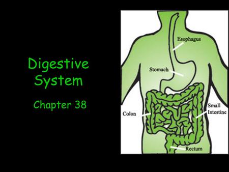 Digestive System Chapter 38. Function Breaks down food into a form that can be absorbed and used by the body.