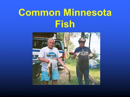 Common Minnesota Fish. Walleye Sauger www.gov.mb.ca.
