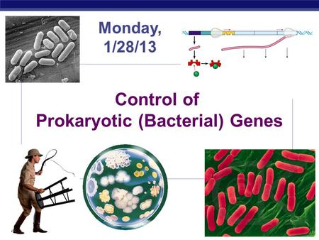 AP Biology 2007-2008 Control of Prokaryotic (Bacterial) Genes Monday, 1/28/13.