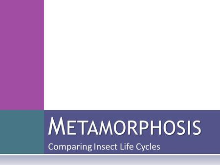 Comparing Insect Life Cycles M ETAMORPHOSIS. I NSECTS ARE E VERYWHERE Look around you. Chances are, there is an insect nearby.