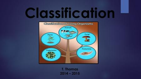 Classification T. Thomas 2014 – 2015