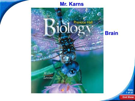 End Show Slide 1 of 37 Biology Mr. Karns Brain. End Show Slide 2 of 37 35-3 Divisions of the Nervous System.