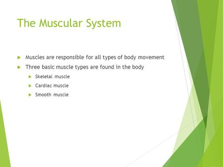 The Muscular System  Muscles are responsible for all types of body movement  Three basic muscle types are found in the body  Skeletal muscle  Cardiac.