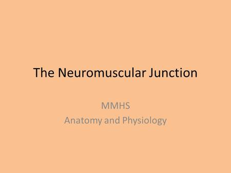 The Neuromuscular Junction MMHS Anatomy and Physiology.