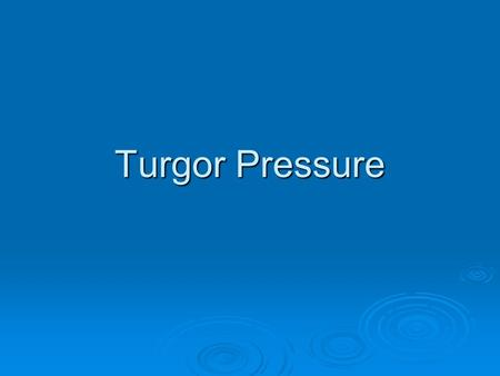 Turgor Pressure.  Turgor Pressure is the main pressure of the cell contents against the cell wall in plant cells and bacteria cells, determined by the.