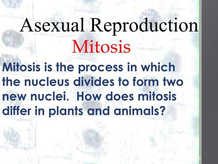 1 1 Asexual Reproduction Mitosiss Mitosis is the process in which the nucleus divides to form two new nuclei. How does mitosis differ in plants and animals?