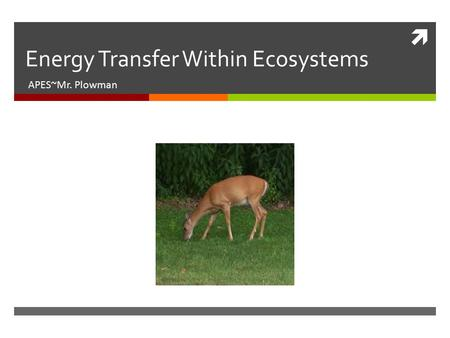  Energy Transfer Within Ecosystems APES~Mr. Plowman.