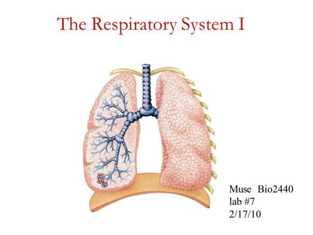 The Respiratory System I