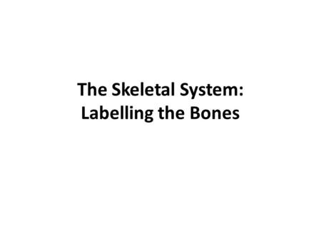 The Skeletal System: Labelling the Bones. 5 Types of Bones Know definitions and where these bones are found in body.