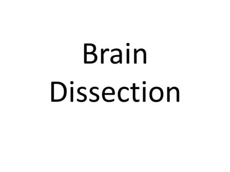 Brain Dissection. Orientation of the Brain Label the Following Aspects of the Brain: Anterior Posterior Lateral Medial.