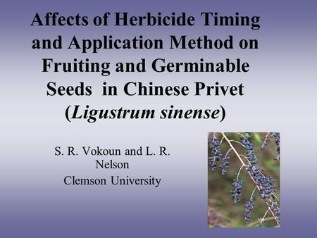Affects of Herbicide Timing and Application Method on Fruiting and Germinable Seeds in Chinese Privet (Ligustrum sinense) S. R. Vokoun and L. R. Nelson.