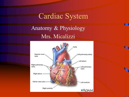 Cardiac System Anatomy & Physiology Mrs. Micalizzi.
