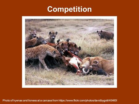 Competition Photo of hyenas and lioness at a carcass from https://www.flickr.com/photos/davidbygott/4046054583.
