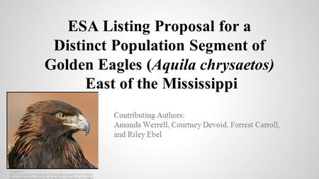 ESA Listing Proposal for a Distinct Population Segment of Golden Eagles (Aquila chrysaetos) East of the Mississippi Contributing Authors: Amanda Werrell,