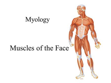 Myology Muscles of the Face. 2 Muscles of Facial Expression Eye Muscles Orbicularis oculi –Under both conscious/unconscious control i.e. blinking –When.