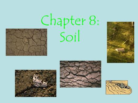 Chapter 8: Soil. Goals Understand how the soil quality determines what can grow Understand how soil quality can determine the survival of societies.