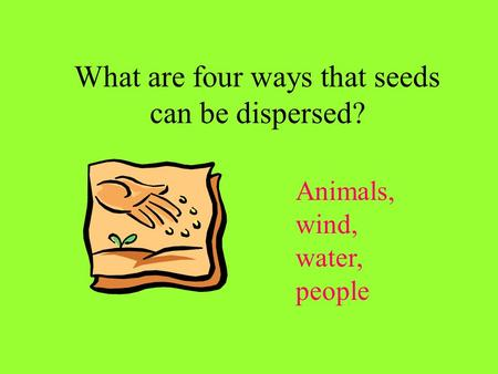 What are four ways that seeds can be dispersed? Animals, wind, water, people.