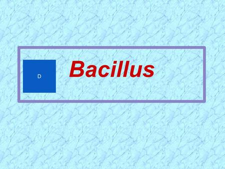 Bacillus D.  ~ 60 species; Gram-positive or Gram-variable bacilli  Large (0.5 x 1.2 to 2.5 x 10 um)  Most are saprophytic contaminants or normal flora.