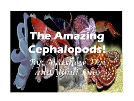 The Amazing Cephalopods! By: Matthew Dai and Yihui Liao.