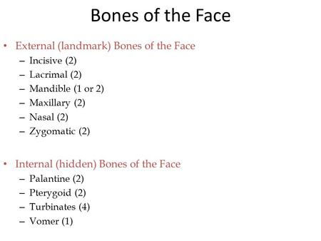 Bones of the Face External (landmark) Bones of the Face