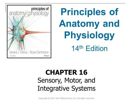 CHAPTER 16 Sensory, Motor, and Integrative Systems Principles of Anatomy and Physiology 14 th Edition Copyright © 2014 John Wiley & Sons, Inc. All rights.
