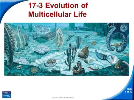 Slide 1 of 30 Copyright Pearson Prentice Hall 17-3 Evolution of Multicellular Life.