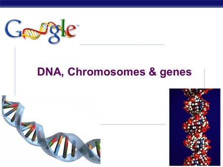AP Biology 2007-2008 DNA, Chromosomes & genes AP Biology Watson and Crick 1953 article in Nature.