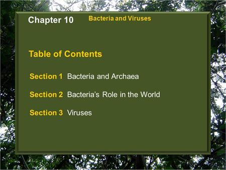 Chapter 10 Table of Contents Section 1 Bacteria and Archaea