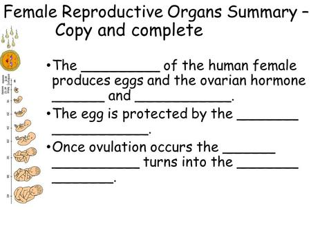 Female Reproductive Organs Summary – Copy and complete The _________ of the human female produces eggs and the ovarian hormone ______ and ___________.