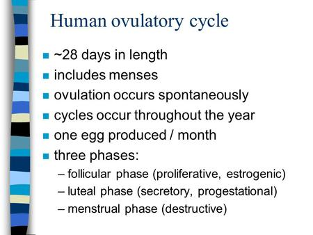 Human ovulatory cycle n ~28 days in length n includes menses n ovulation occurs spontaneously n cycles occur throughout the year n one egg produced / month.