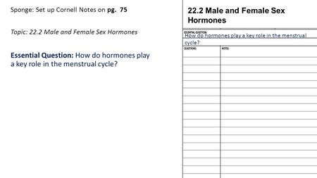 Sponge: Set up Cornell Notes on pg. 75 Topic: 22.2 Male and Female Sex Hormones Essential Question: How do hormones play a key role in the menstrual cycle?