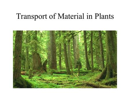 Transport of Material in Plants. Internal Transport in Plants Small plants rely on simple diffusion or branching tubules to transport material throughout.