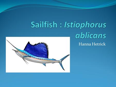 Hanna Hetrick. Classification Kingdom – Animalia Phylum – Chordata Class - Actinopterygii.