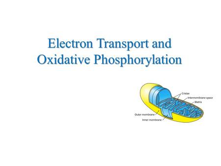 Electron Transport and Oxidative Phosphorylation.