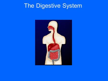 The Digestive System Function: Breaks down foods into simpler molecules that can be absorbed and used by the cells of the body.