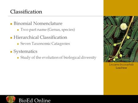 Www.BioEdOnline.org Leucaena leucocephala Lead tree Classification Binomial Nomenclature Two part name (Genus, species) Hierarchical Classification Seven.