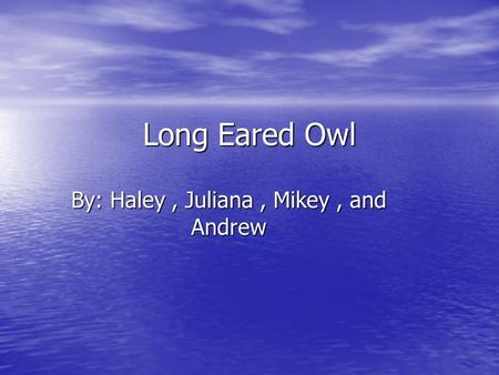 Long Eared Owl By: Haley, Juliana, Mikey, and Andrew.