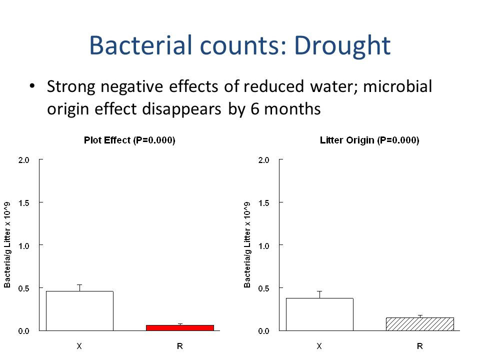 Bacterial counts: N addition Positive effect of N in litter origin at 6 months