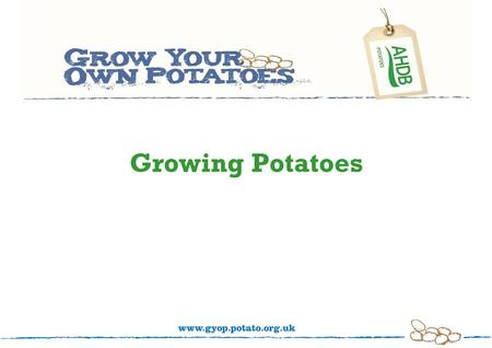 Growing Potatoes Needs a title – Learning about potatoes.