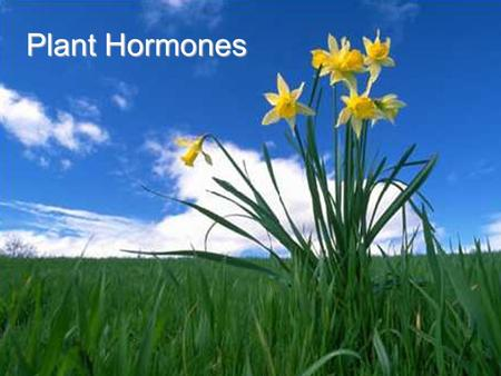 Plant Hormones. Stimulus A change in organism's environment.